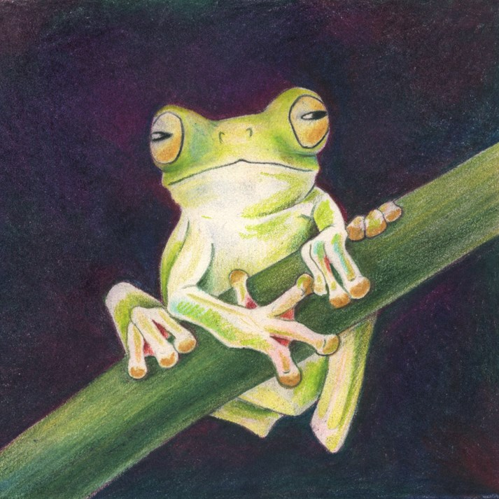 """Nature, Wildlife Fine Art,Frog SWEET LITTLE FROGGIE The Art of Nature, Fine Art by Mindy Lighthipe"" original fine art by Mindy Lighthipe"