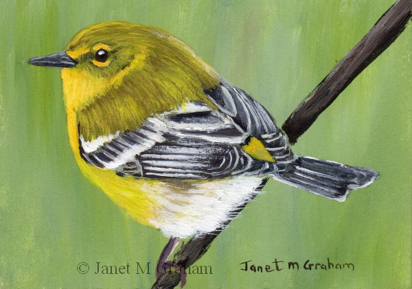 """Pine Warbler ACEO"" original fine art by Janet Graham"