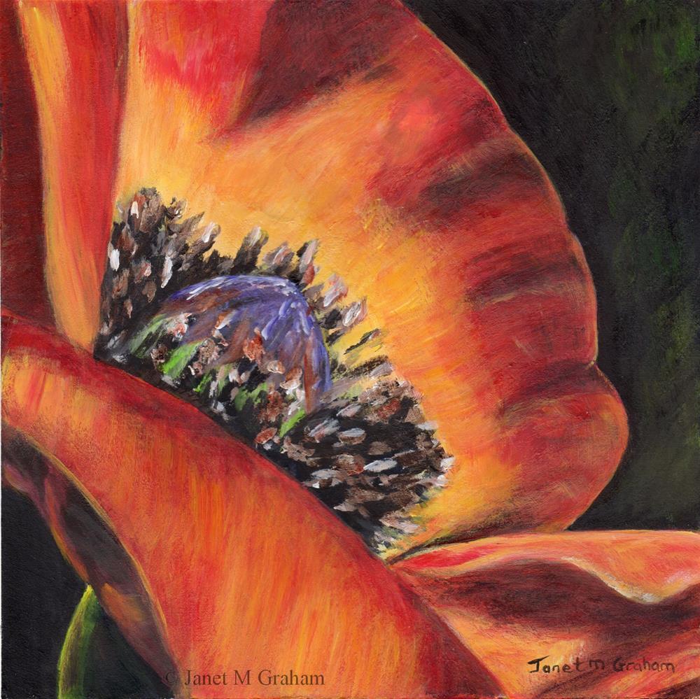 """Poppy 2"" original fine art by Janet Graham"