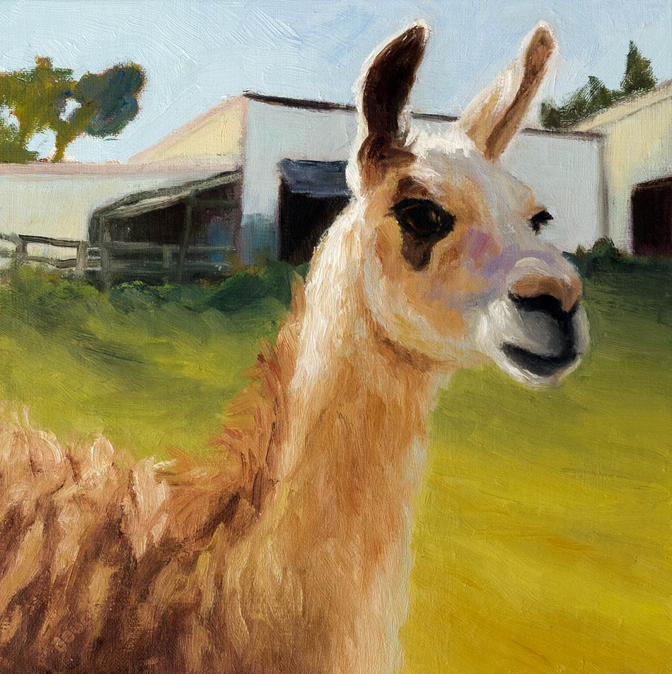 """Backyard Lama"" original fine art by Jana Bouc"