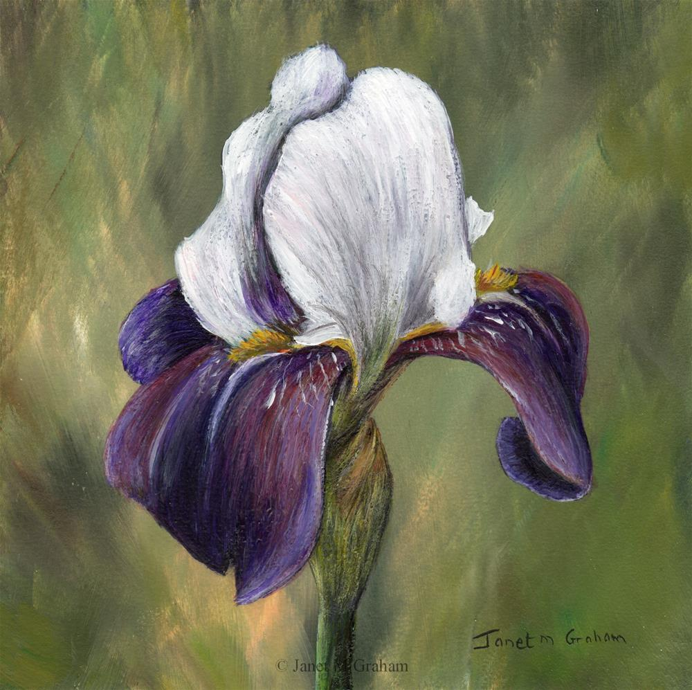 """Iris No 3"" original fine art by Janet Graham"
