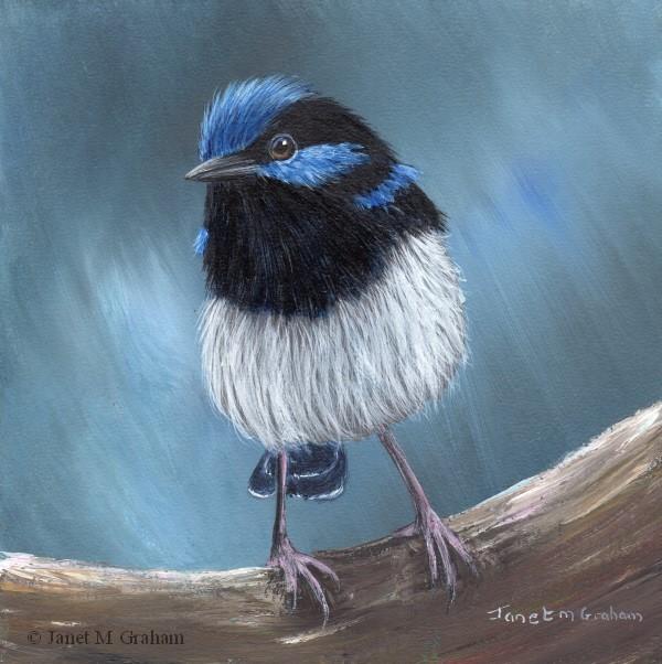 """Superb Fairy Wren No 19"" original fine art by Janet Graham"