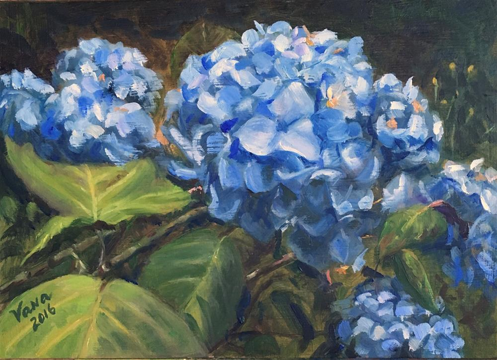 """Blue Hydrangeas"" original fine art by Vana Meyers"
