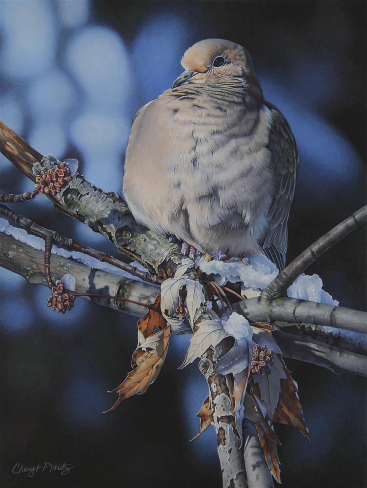 """Serene Mourning Dove"" original fine art by Cheryl Plautz"