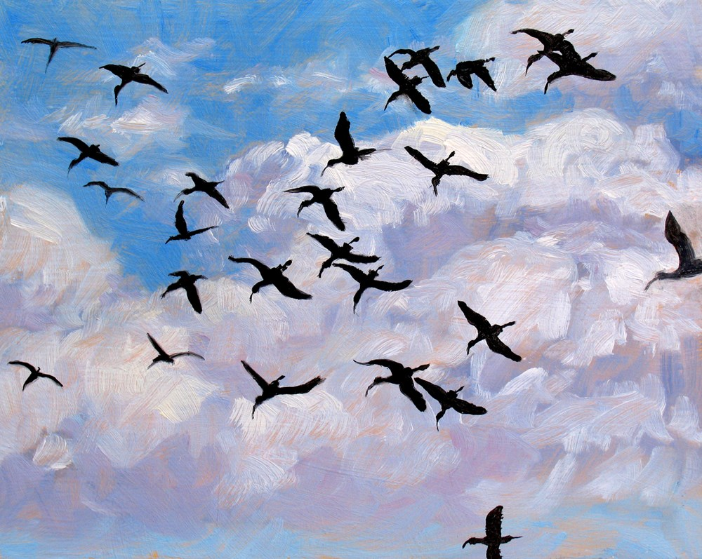 """Ibises in Flight"" original fine art by Rhett Regina Owings"