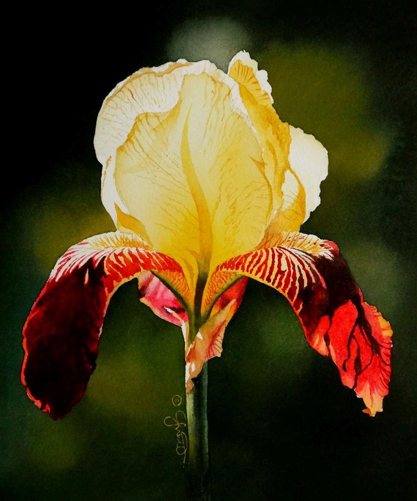 """Burgundy & Yellow Iris"" original fine art by Jacqueline Gnott, TWSA, WHS"