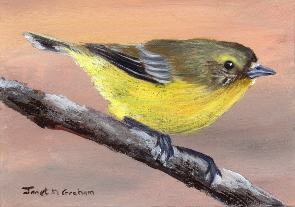 """Yellow Thornbill ACEO"" original fine art by Janet Graham"
