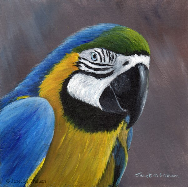 """Blue and Yellow Macaw"" original fine art by Janet Graham"