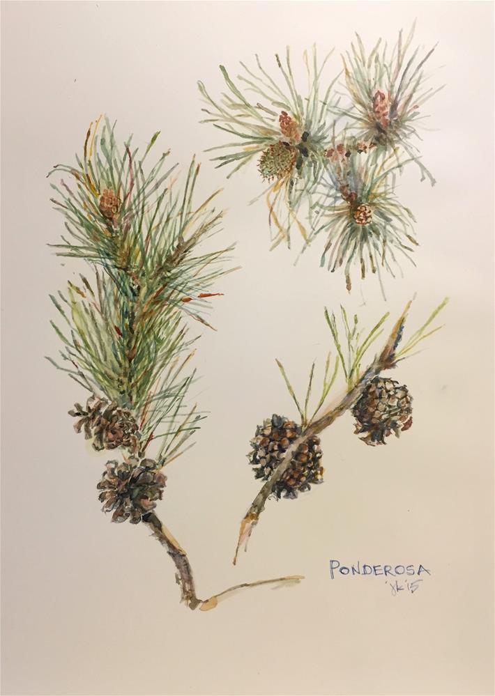 """Ponderosa, Pinus ponderosa"" original fine art by Jean Krueger"