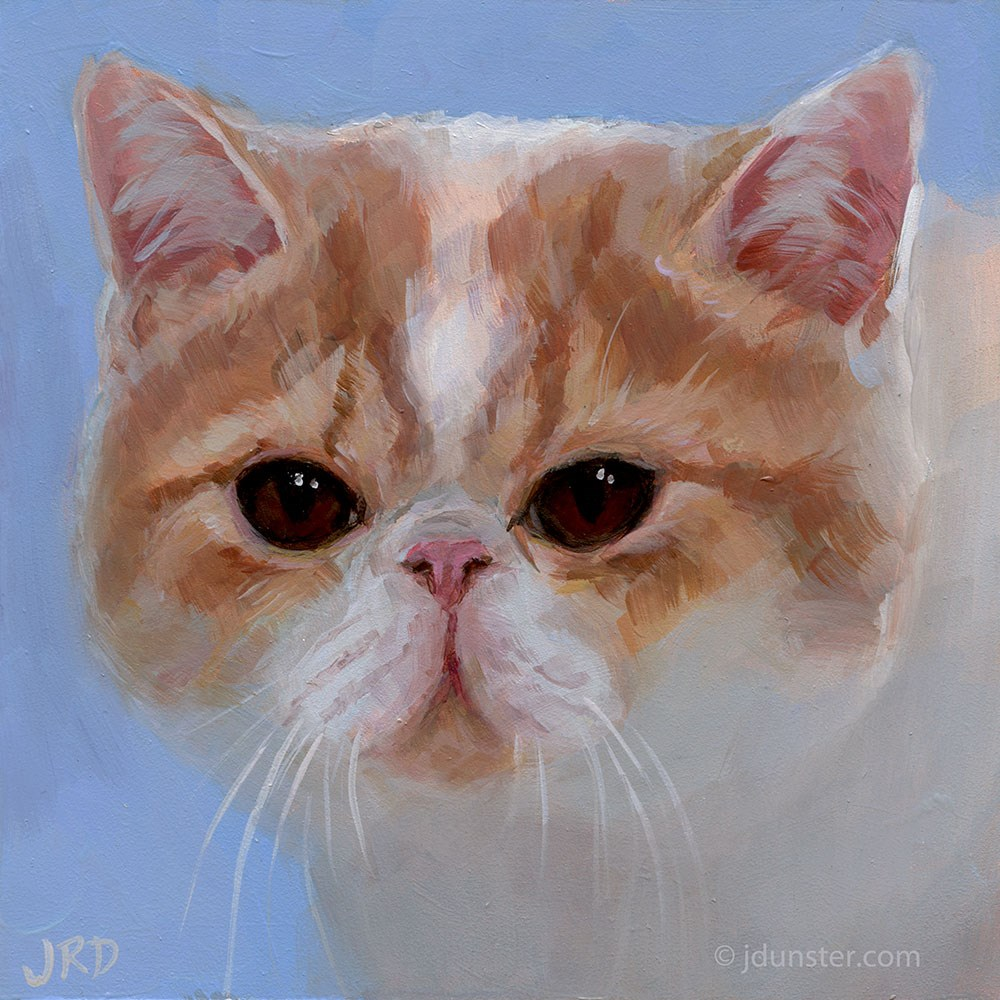 """Pug-nosed Cat"" original fine art by J. Dunster"