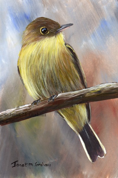"""Yellow Bellied Flycatcher"" original fine art by Janet Graham"