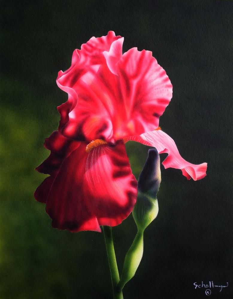 """Crimson Bloom"" original fine art by Fred Schollmeyer"