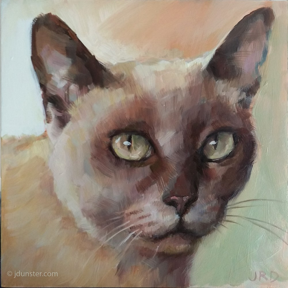 """Intense Siamese Kitty"" original fine art by J. Dunster"