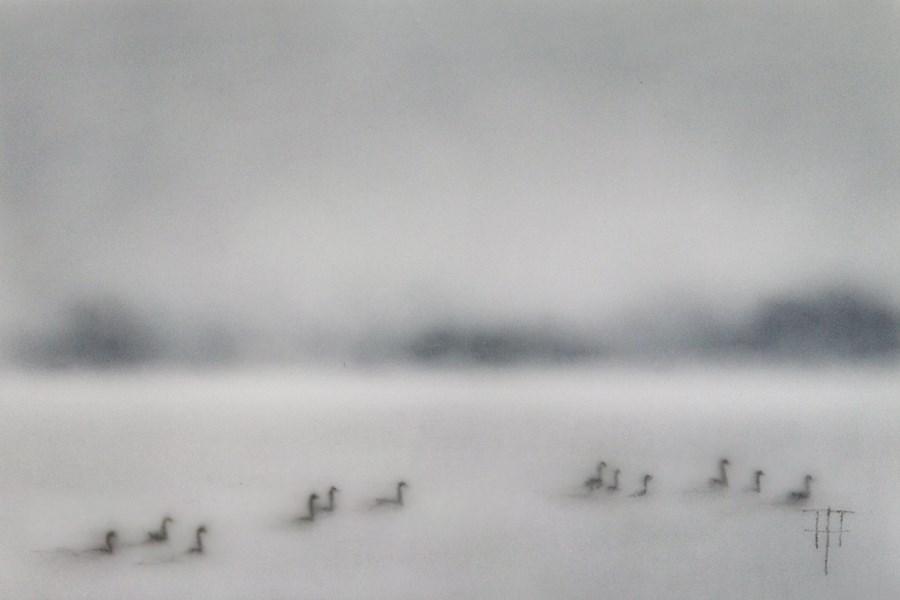 """Geese on the Lake"" original fine art by Terri Heinrichs"