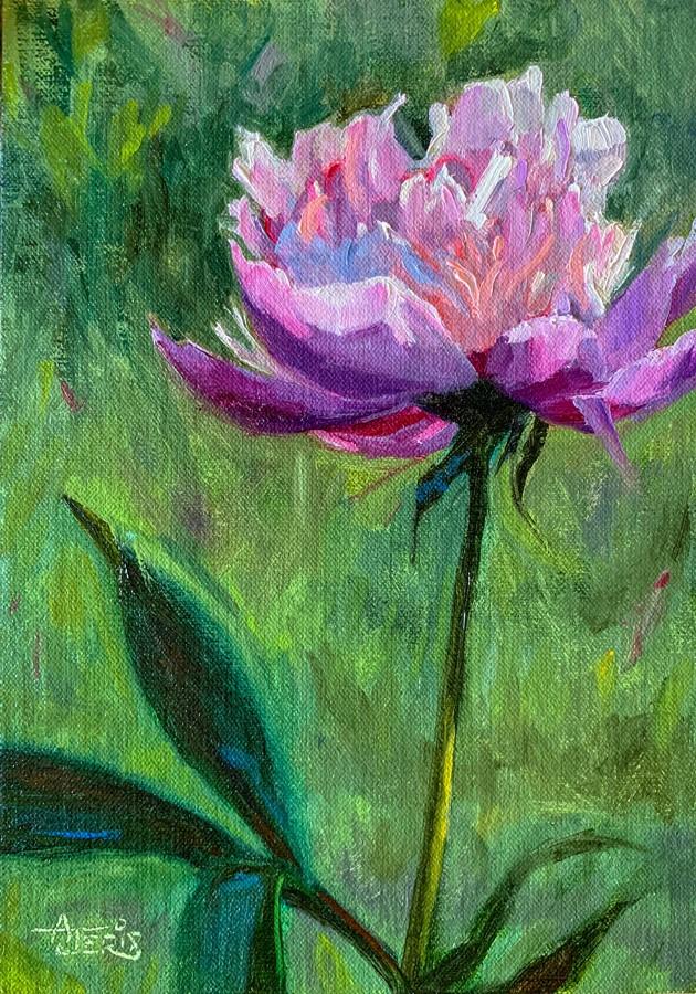 """""""Sunlit Peony"""" original fine art by Andrea Jeris"""