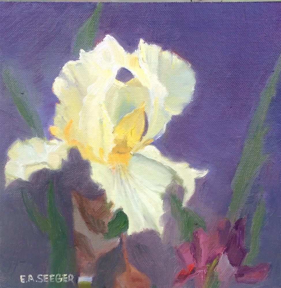 """Iris - 30 in 30 day 8"" original fine art by Elisabeth Seeger"