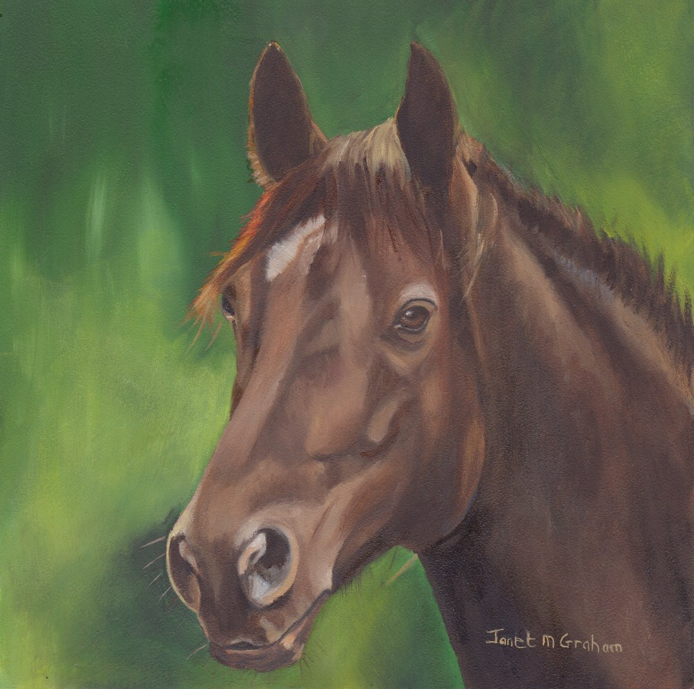"""Brown Beauty"" original fine art by Janet Graham"