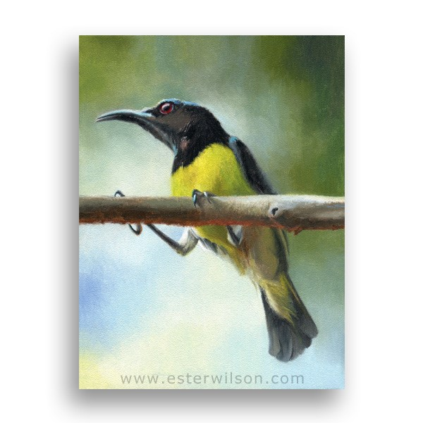 """Early Bird"" original fine art by Ester Wilson"