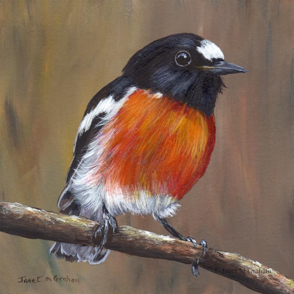 """Scarlet Robin No 2"" original fine art by Janet Graham"