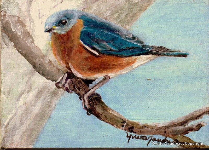 """Original Miniature Eastern Blue Bird"" original fine art by Yvette Gaudreau"