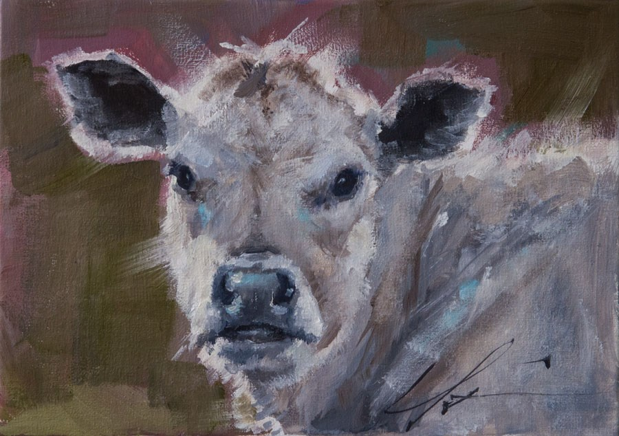 """White Calf"" original fine art by Clair Hartmann"