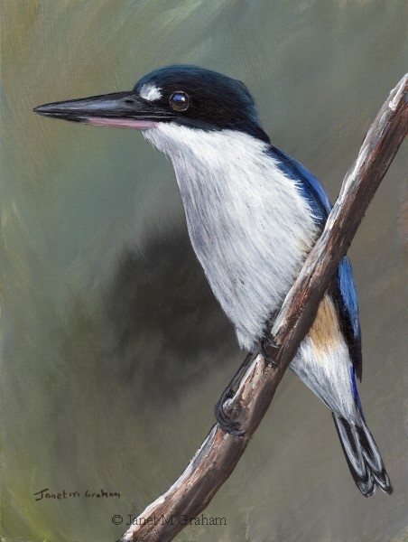 """Forest Kingfisher"" original fine art by Janet Graham"