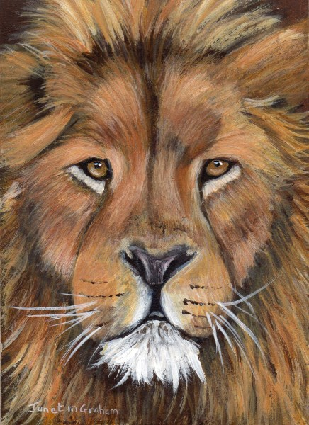 """""""Lion ACEO"""" original fine art by Janet Graham"""