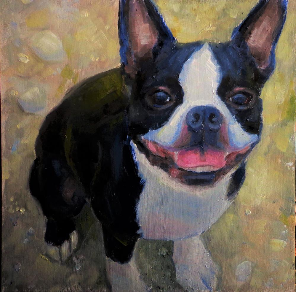 """Boston terrier"" original fine art by Maria Z."
