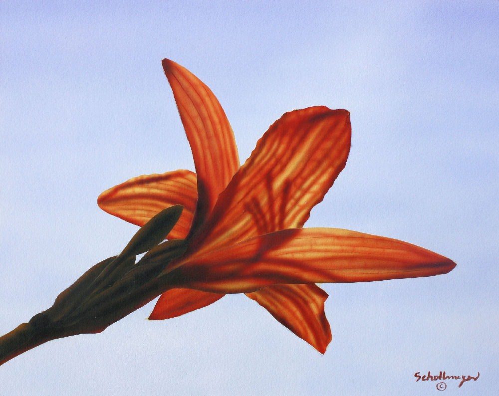 """Translucent Day Lily"" original fine art by Fred Schollmeyer"