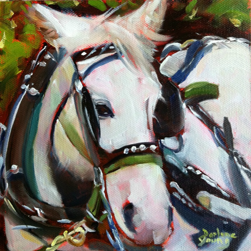 """""""White Carriage Horse, oil on ray mar, 6x6"""" original fine art by Darlene Young"""