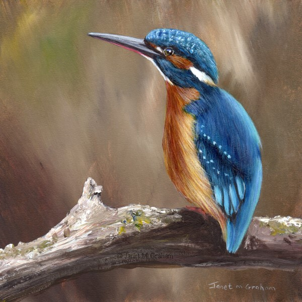 """Kingfisher No 3"" original fine art by Janet Graham"