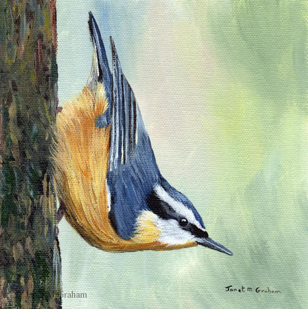 """""""Red Breasted Nuthatch"""" original fine art by Janet Graham"""