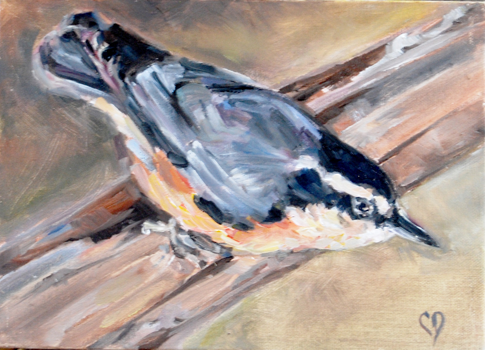 """Red Breasted Nuthatch"" original fine art by Carol DeMumbrum"