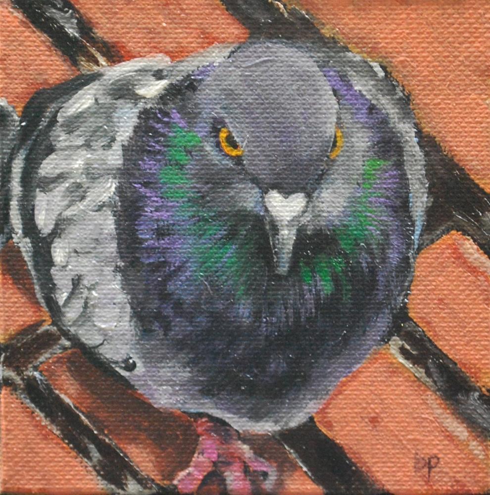 """""""Pigeon glare"""" original fine art by Beverley Phillips"""