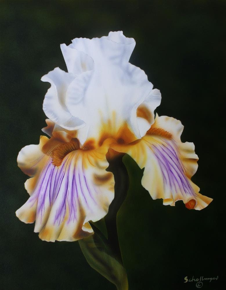 """""""Ivory Iris"""" original fine art by Fred Schollmeyer"""