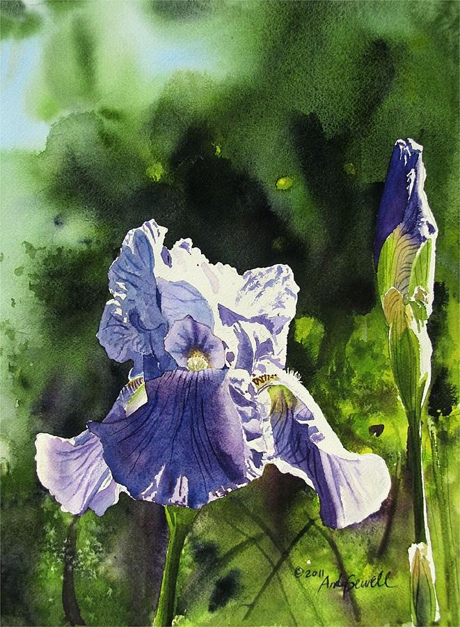 """Purple Iris Glow"" original fine art by Andy Sewell"