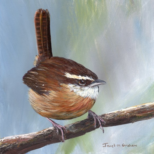 """Carolina Wren"" original fine art by Janet Graham"