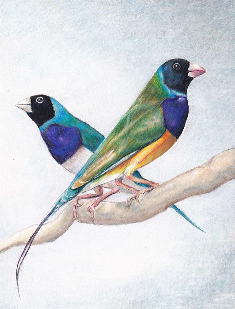 """""""Lady Gouldian Finches"""" original fine art by Charlotte Yealey"""