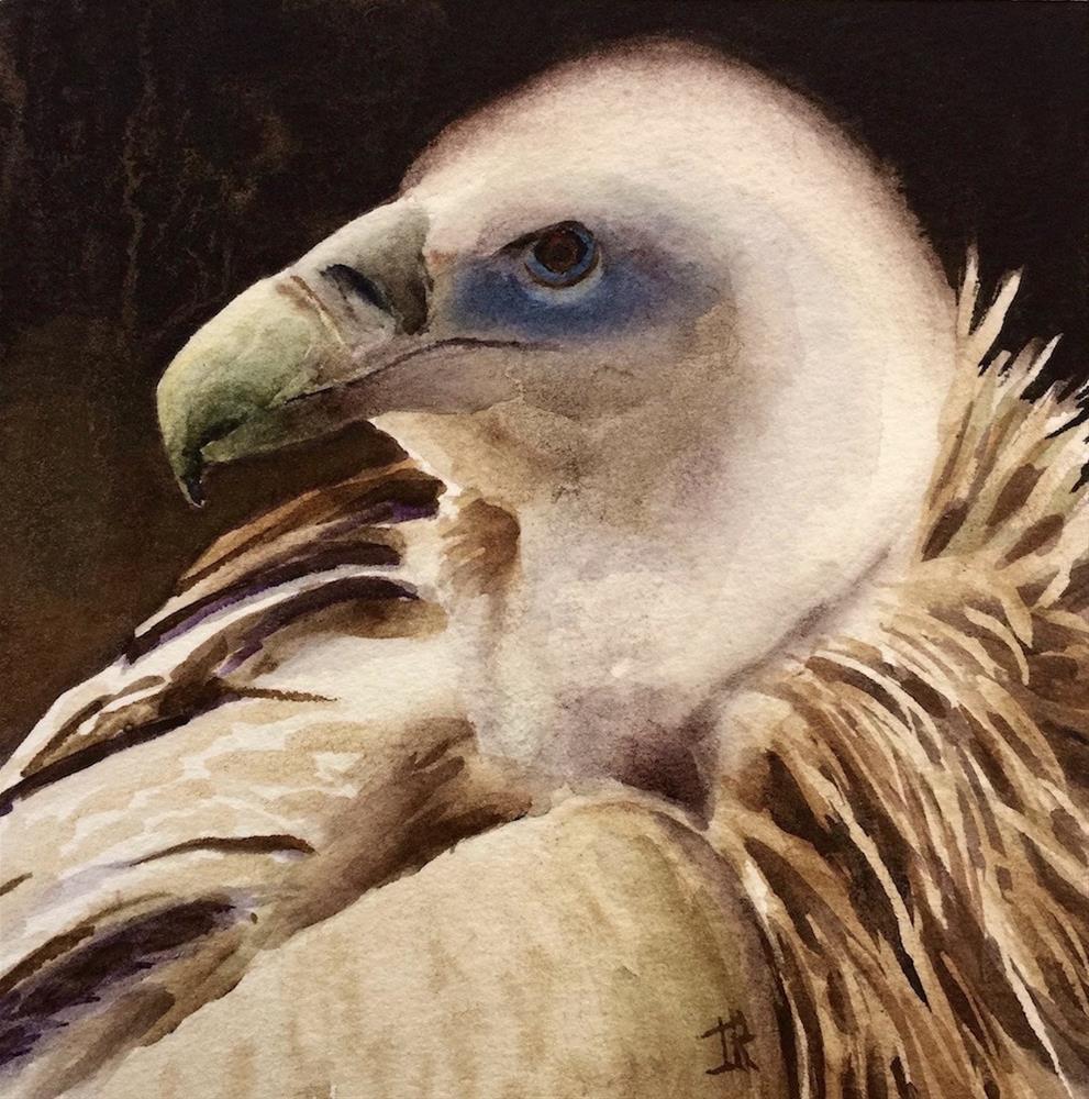 """""""Eurasian Griffon Vulture"""" original fine art by June Rollins"""