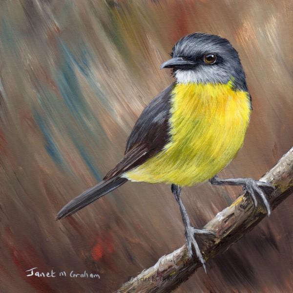 """Eastern Yellow Robin No 6"" original fine art by Janet Graham"