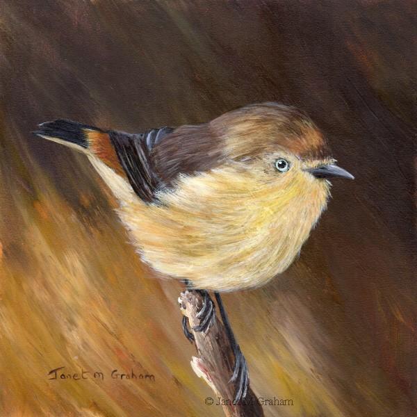 """Chestnut Rumped Thornbill"" original fine art by Janet Graham"