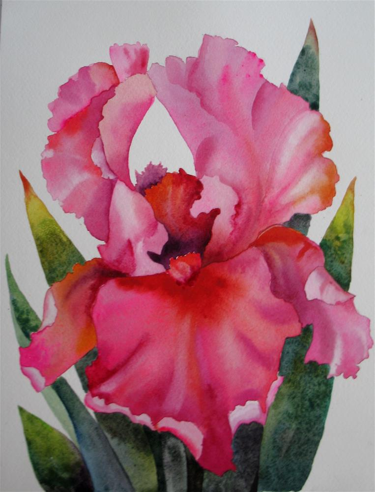 """Bright Pink Iris"" original fine art by Nel Jansen"