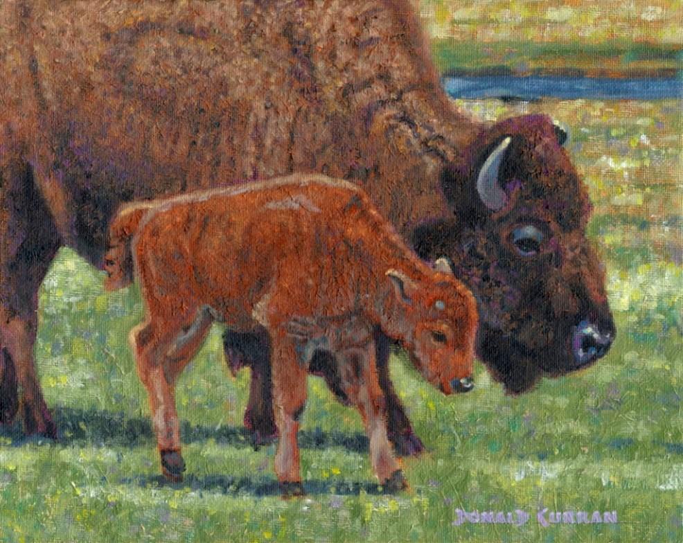 """Buffalo"" original fine art by Donald Curran"