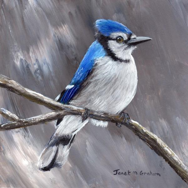 """Blue Jay No 5"" original fine art by Janet Graham"