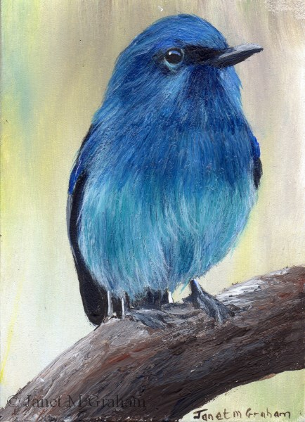 """Pale Blue Flycatcher ACEO"" original fine art by Janet Graham"