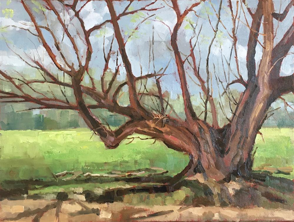 """Gnarly Old Willow"" original fine art by Carol Granger"