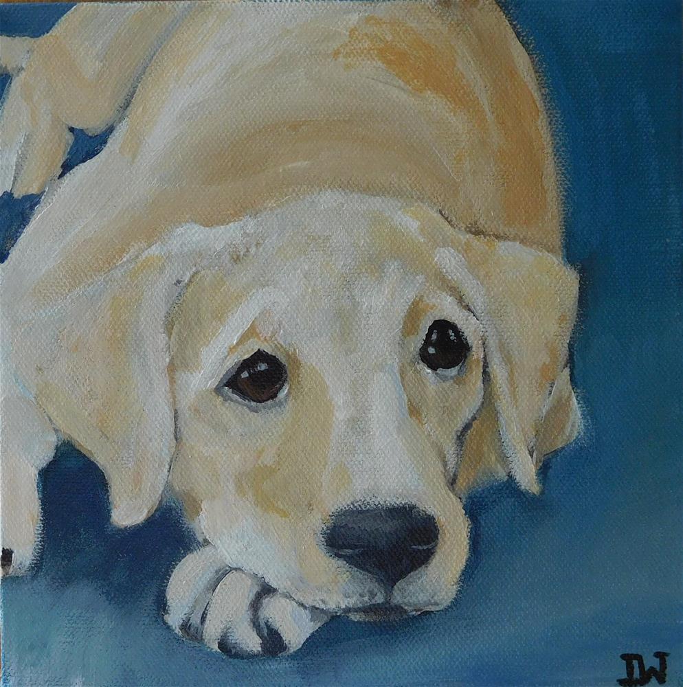 """Labrador puppy"" original fine art by Daryl West"