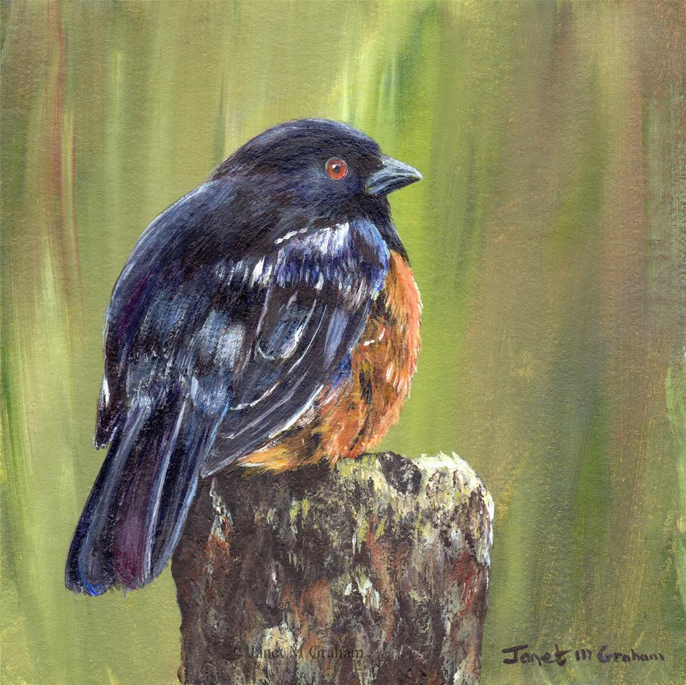 """""""Spotted Towhee"""" original fine art by Janet Graham"""