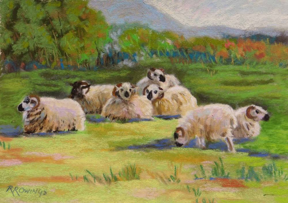 """Sheep at Mission Ranch"" original fine art by Rhett Regina Owings"