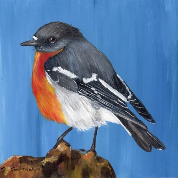 """Flame Robin"" original fine art by Janet Graham"